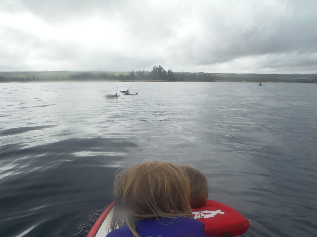 Paddling with Dolphins!